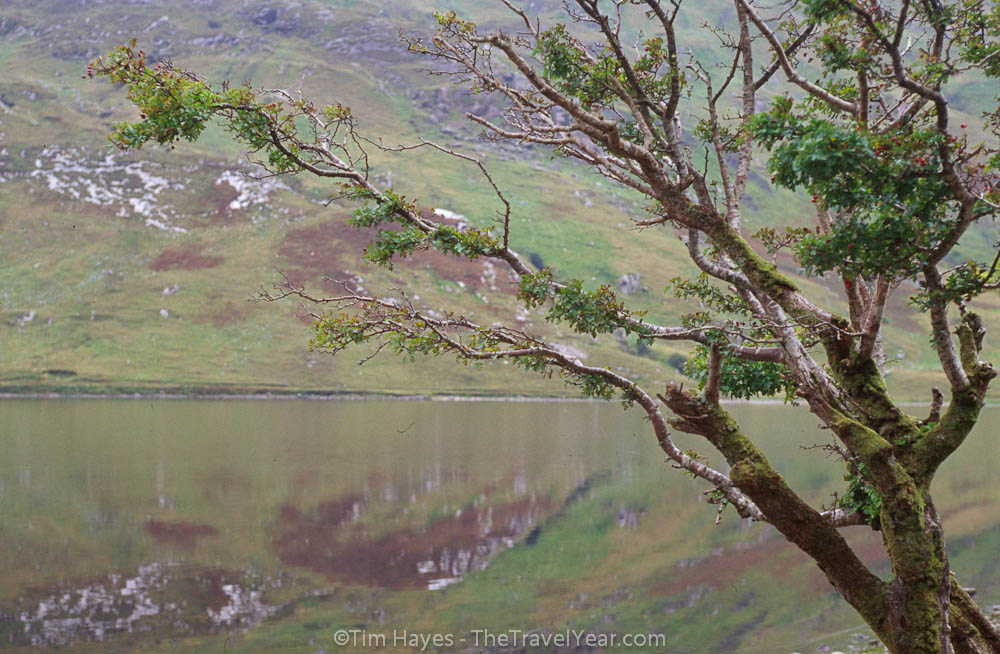 A tree stands alongside a lake in the Connemara area of County Galway, near the Kylemore Abbey.