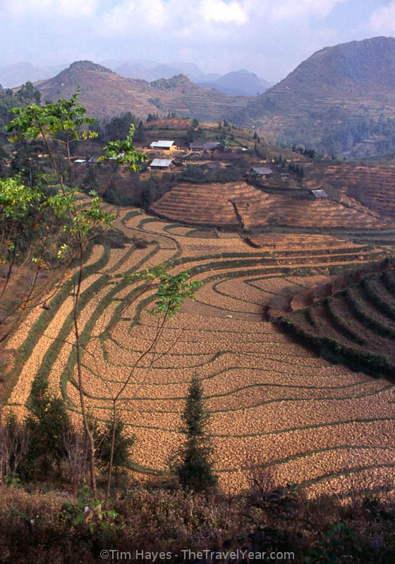 Dry fields of rice await the monsoon rains in northern Vietnam.